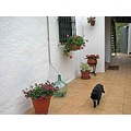 terrace garden flowers cat home spain milibuhscatclub