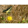 insect nature yellow travel flowers plant