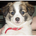 Checkers