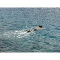 montello dubrovnik kroatia sea adriatic swimming