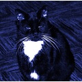 cat blue hue photo touch