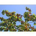 fruit apricots food foodfph summer