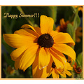 flowers nature blackeyedsusan summer