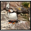 went to see these amazing birds on the farne islands , well worth a visit