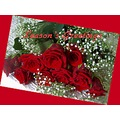 merrychristmas seasonsgreetings red roses