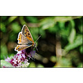 Butterfly Nature Macro