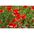 wildlife flower nature reserve insect alora casaimaginees spain retreat