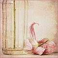 bottle lily pink still life