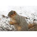 """We call her """"BIG MAMA"""".  This squirrel is as big as my cat!"""