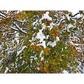 October snow czechrepublic