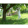Aerovita nature eden garden love paradise beauty earth Amalthea goats sheep