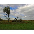 nature landscape field tree sky could