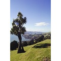Otago Harbour, New Zealand