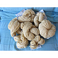 spinning wheel wool knitting