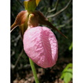 flower lady slippers