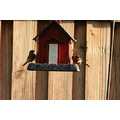 backyard birds roncarlin