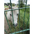 gatefriday pony animal horses