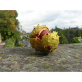chestnut nature luxembourg