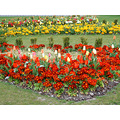 flowerbed yorkshire eastpark hull flowers