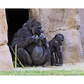 SafariPark animals roncarlin nature