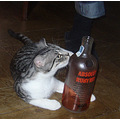 cats vodka