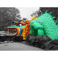 colourful dragon