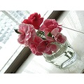 carnations pink flower funfriday stilllifefriday