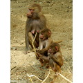 zoo emmen monkeys