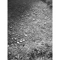 candy hell 666 rocks path way black white bw nature