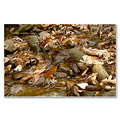 creek river yonghan fallen leaves autumn mountain nature landscape