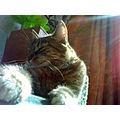 cat sun room photo animals