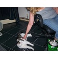 Divvy the attention seeker.  A bit blurred but I've not taken any other pictures for a while. ...