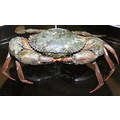crab India Lucknow PortBlair