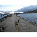 Otago Dunedin Heads Harbour Mole Weesue Dog