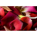 Dedicated to KEIT