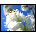 macro white nature flower