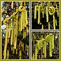 hazelcatkins nature knowhow knots collage