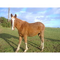 this is lola rose she is taya's foal