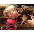 toby meets buddie, my new little puppy! im sorry I haven't commented last few days I have been bu...