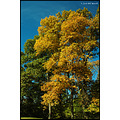 stlouis missouri us usa landscape fall tree sky blue yellow 2007