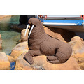 seaworld orlando florida lake walrus sculpture