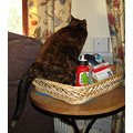3. and not to be outdone, Sasha invented a new pub meal, Cat in a Basket!