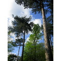Tall trees nature outdoors woods