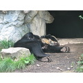 zoo spectacled bear