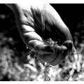water hand black white BW BW Nikon D70