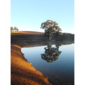 reflectionthursday farm dam tree corner perth hills littleollie