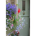back door flowers
