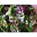 homegrown salad 2007
