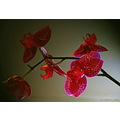 closeup macro plants orchid lighting