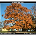 stlouis missouri usa fall color rust CCP tree 101612